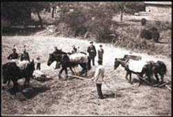 Baier Family with Horses, 1900