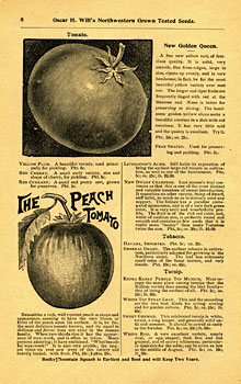 will catalog page featuring tomato