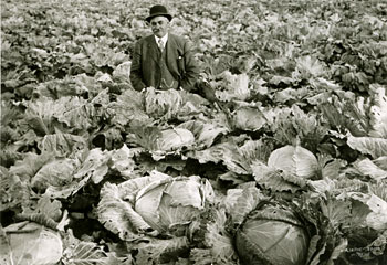 Peter Reid, Deputy Warden with cabbage garden, state penitentiary, Bismarck, ND