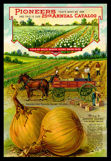 1912 Will's Seed Company Catalog Back Cover, featuring Dakota Globe Onions