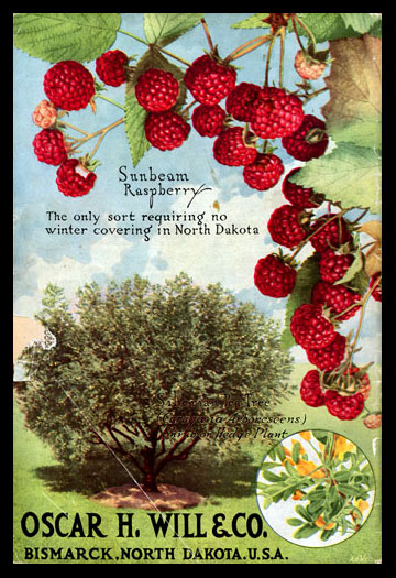 1918 Will's Seed Company Catalog Back Cover