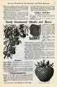 Will Seed Company Catalog 1902 p3