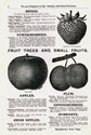 Will Seed Company Catalog 1903 p4