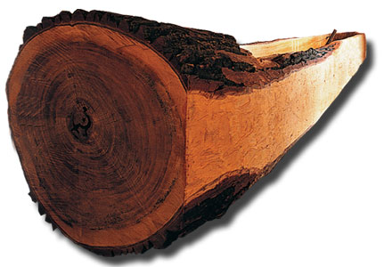 pirogue made from holowed out cottonwood tree