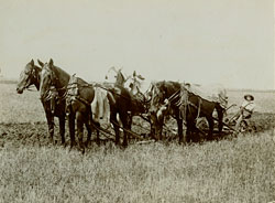 five horse team plowing